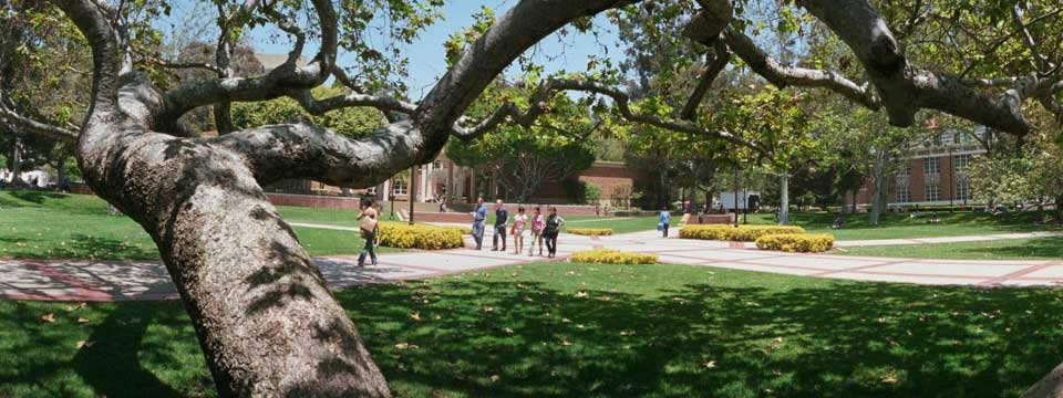 A tree is at the foreground of a campus walkway