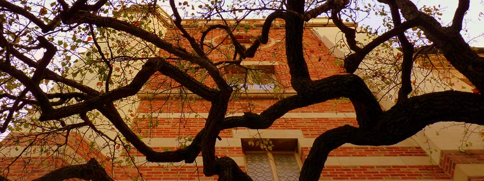 Tree in front of red brick classroom building